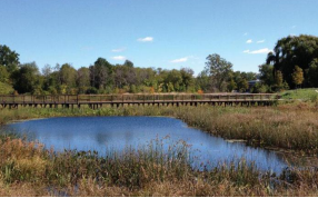 Walkway through the newly constructed Wetlands