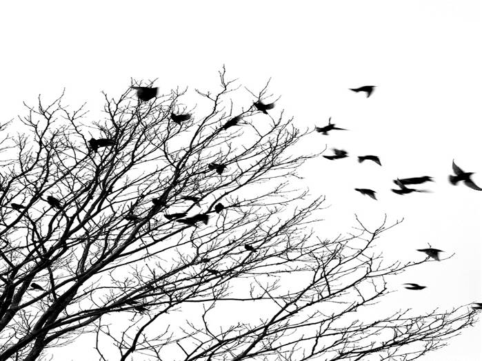 birds flying from a tree