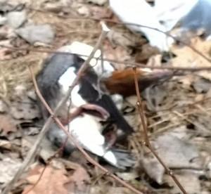 2014-05-27-dead-bird