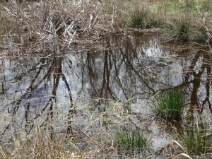 Alewife swale restoration meadow