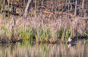 heron-goose-turtle5-2-14
