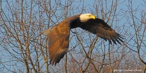 eagle2